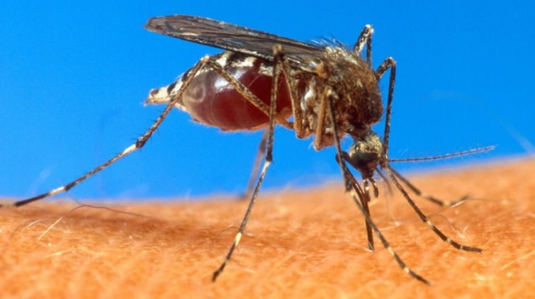 FIRST CASES OF MOSQUITO VIRUS REPORTED IN MIAMI