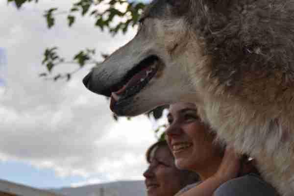 Florida Preserve  brings  wolves, people together