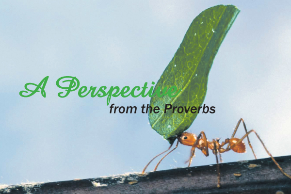 A Perspective from the Proverbs