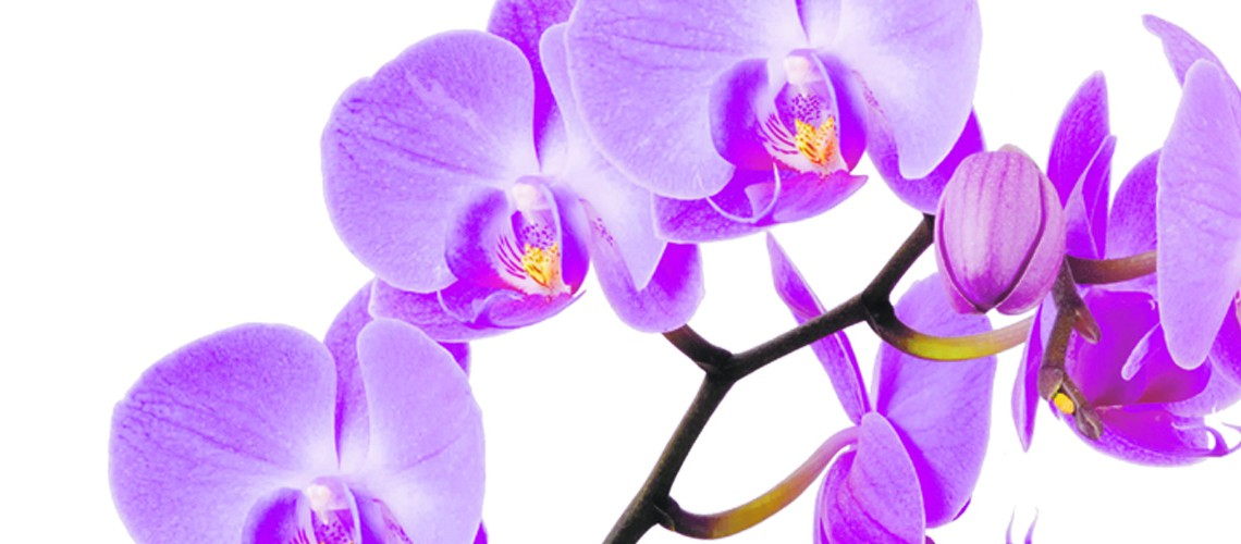 Florida woman's orchids donated to Smithsonian