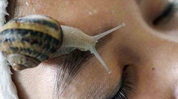 Snails-slither-into-spa-scene-in-Thailand-and-around-world