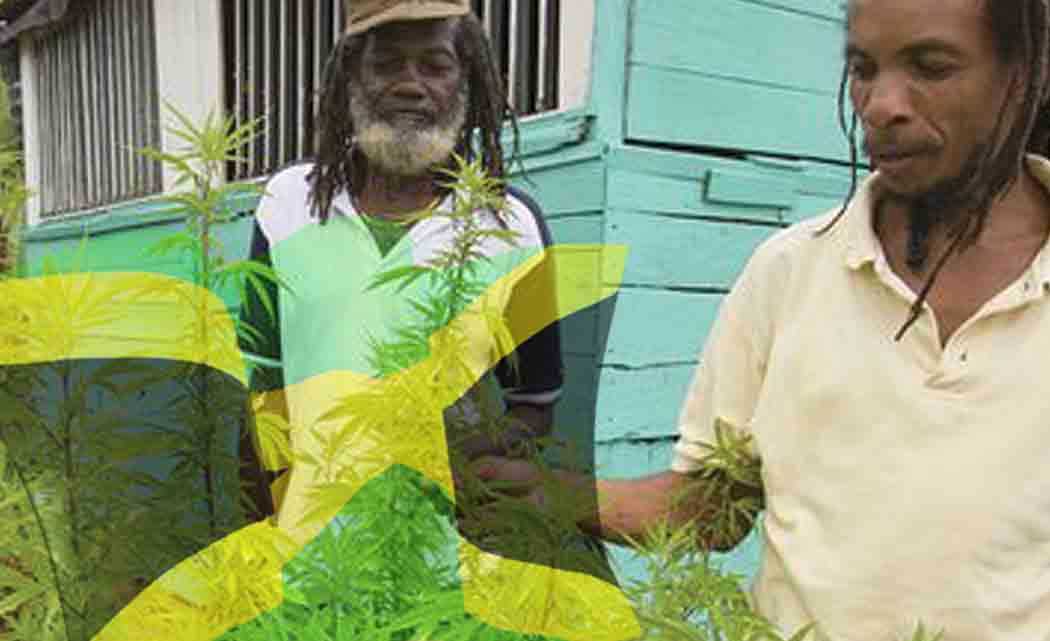 Jamaica-Senate-starts-debate-on-pot-decriminalization-bill-