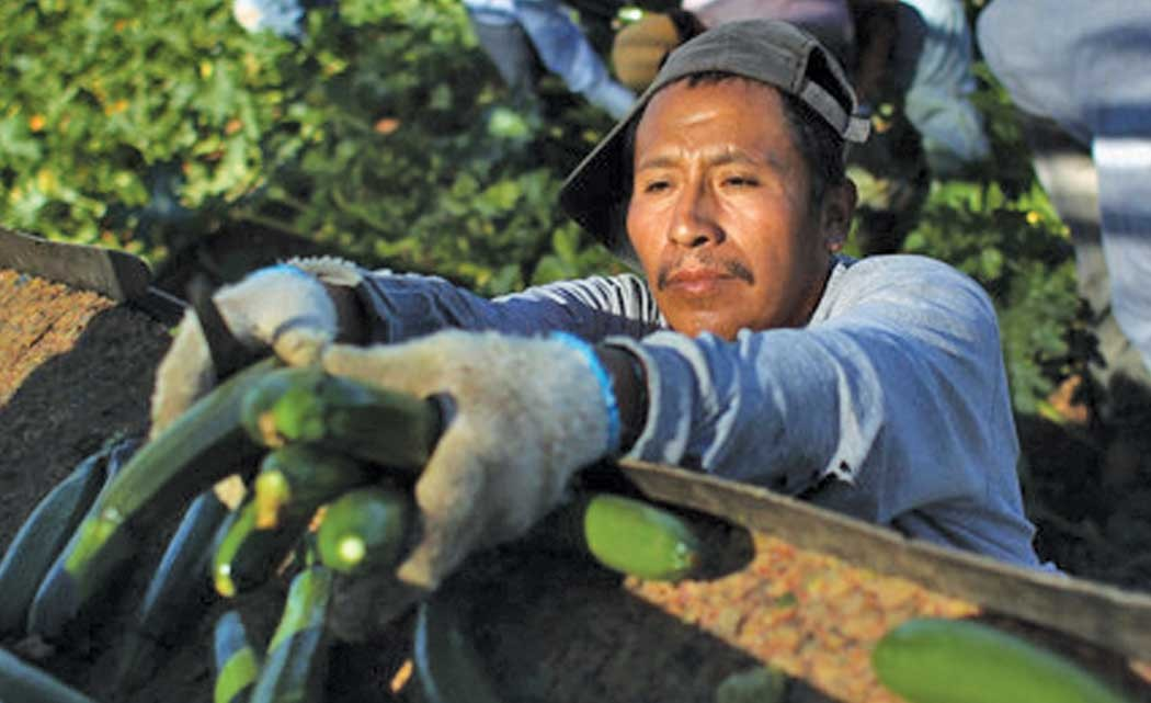 _Baja-farmworkers-strike-for-better-conditions