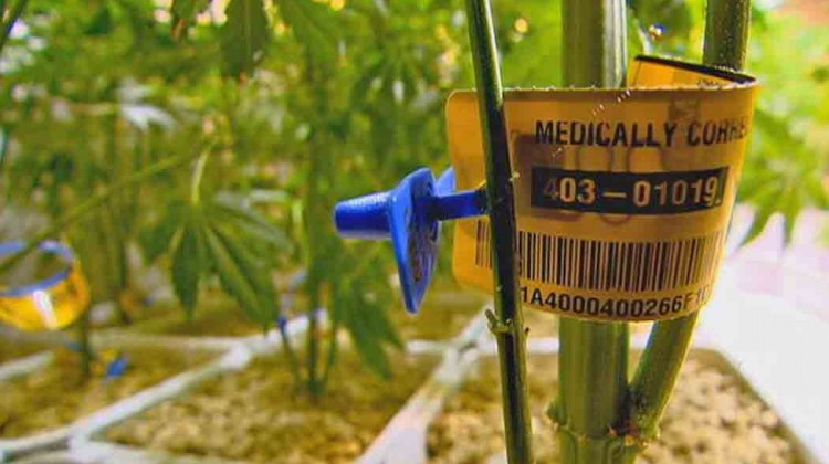 PharmaCann-to-accept-its-2nd-marijuana-grow-permit