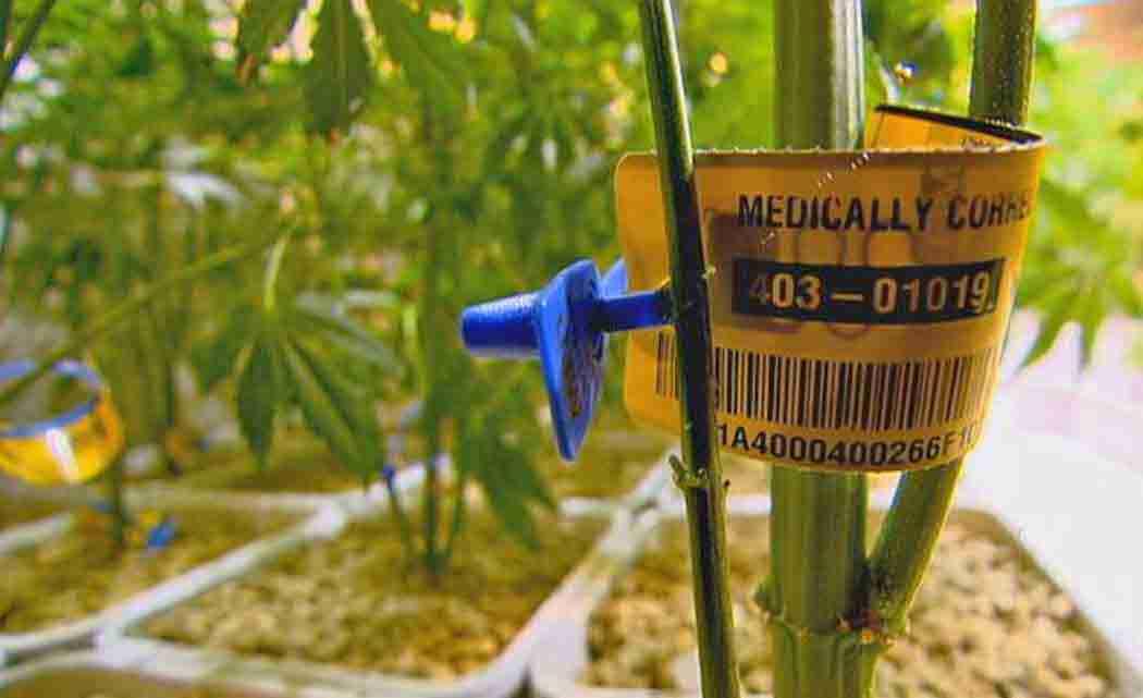 PharmaCann-to-accept-its-2nd-marijuana-grow-permit