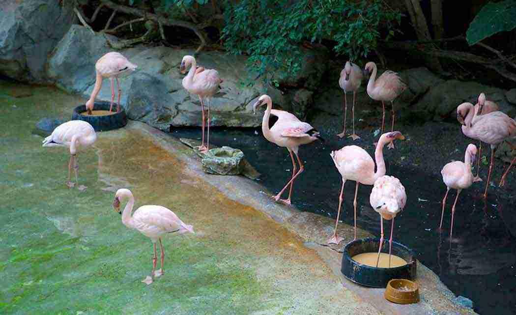 minnesota-zoo