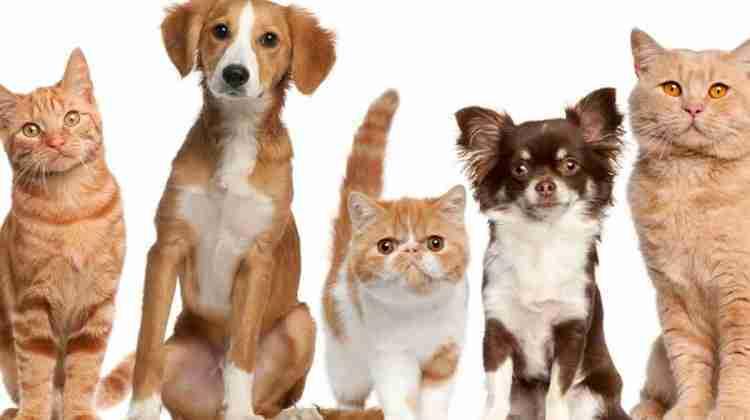 DogsandCats