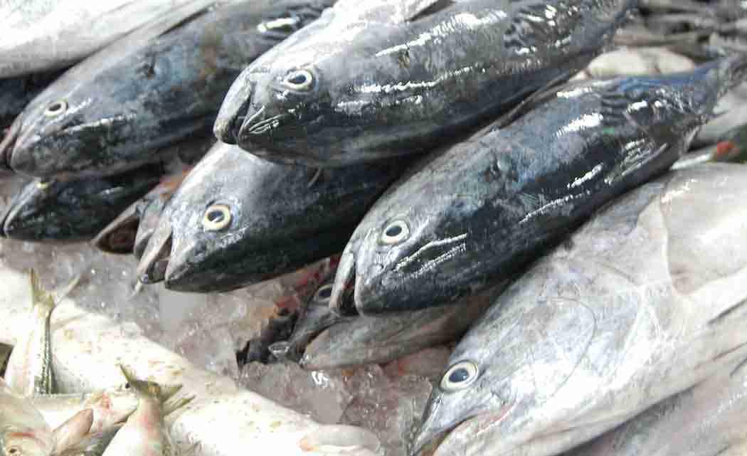 fresh-fish-market