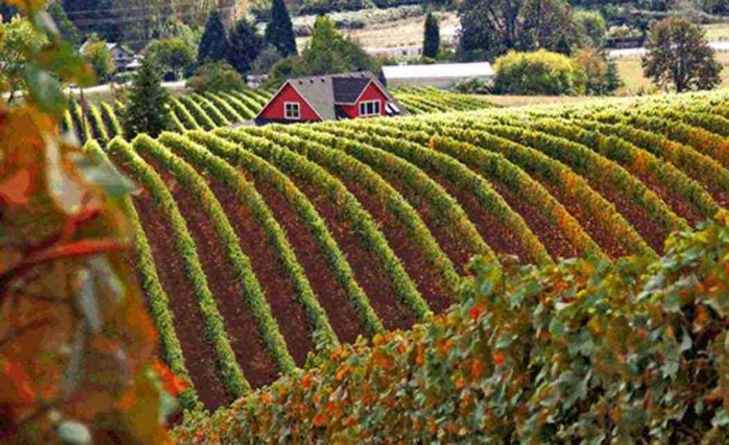oregeon-wine-crop