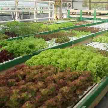 quaponics-greenhouse