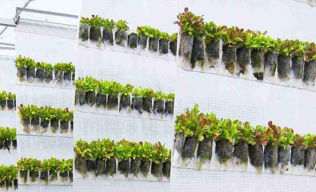 vertical-farming
