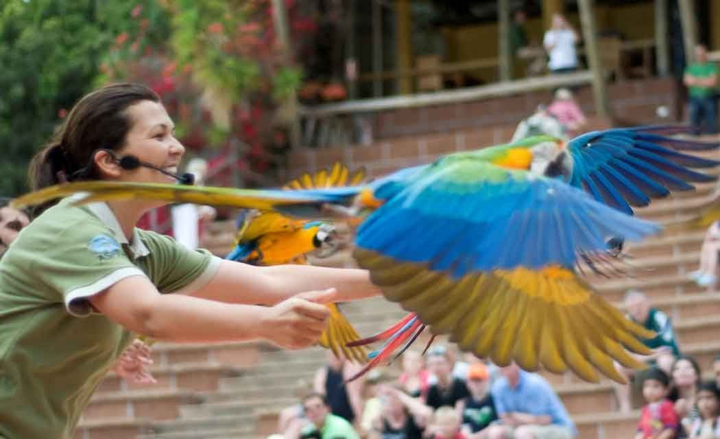 bird-shows.jpg