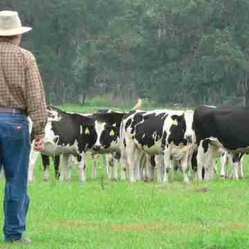dairy-farmer