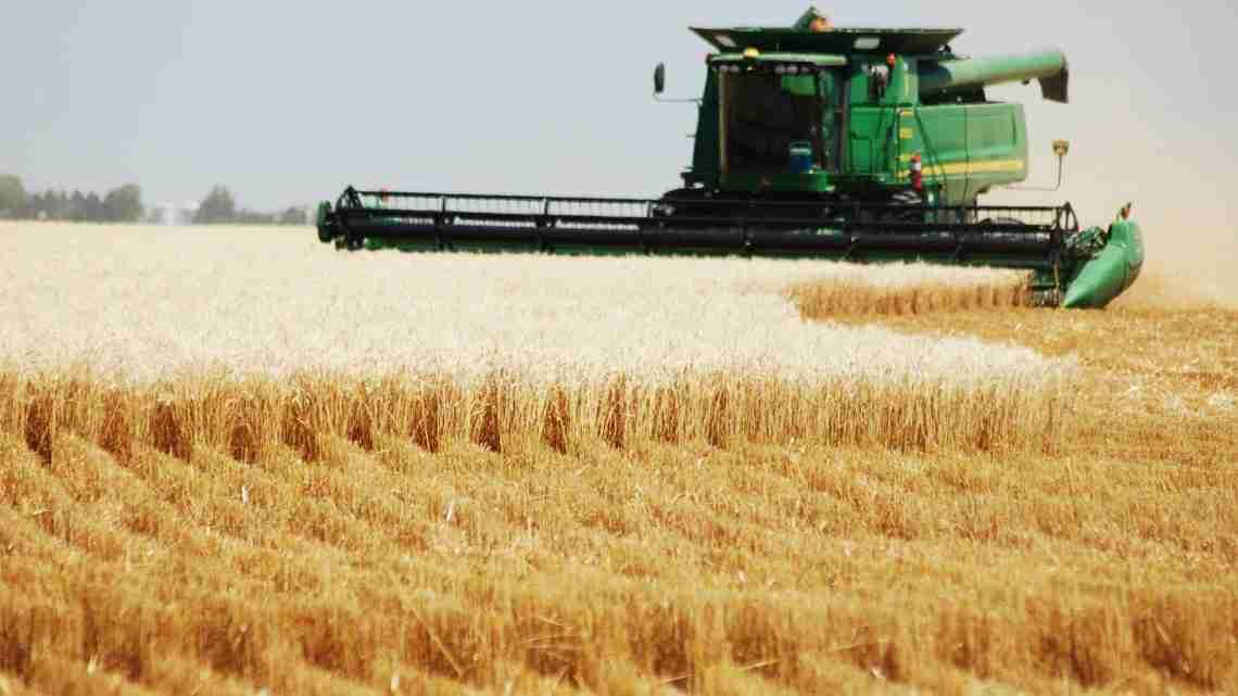 harvesting-wheat