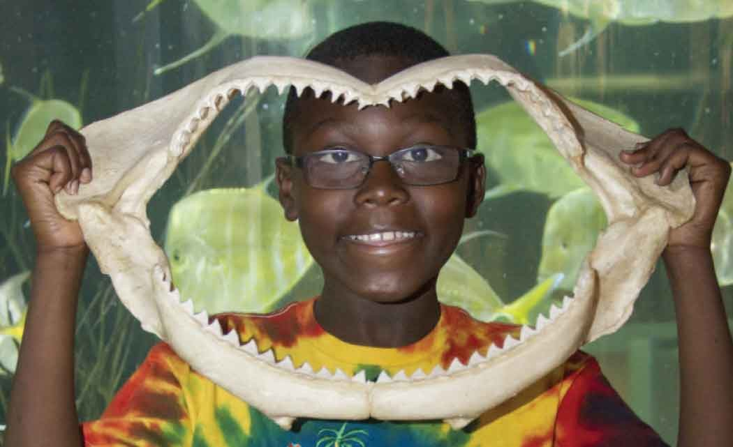 Exhibit-aims-to-teach-South-Floridians-about-sharks,-safety