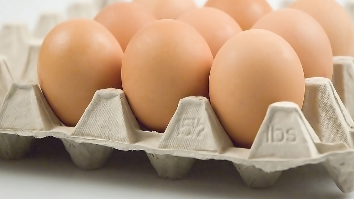 egg cage free