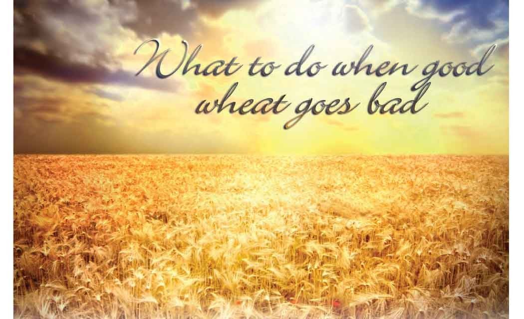 GOOD-WHEAT-GOES-BAD