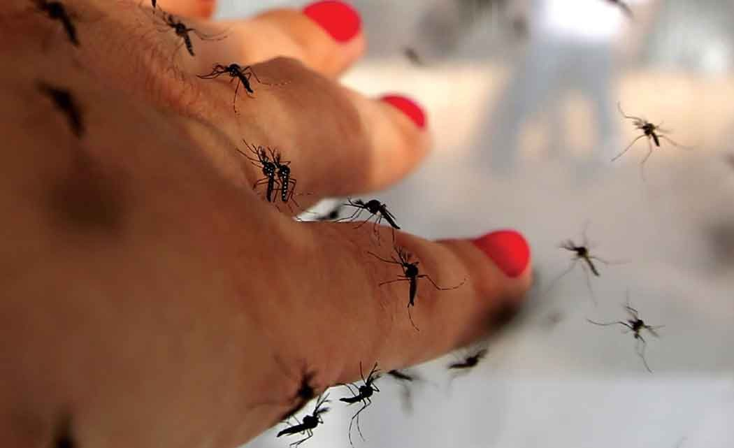 Mosquito-control-promotes-health,-saves-society