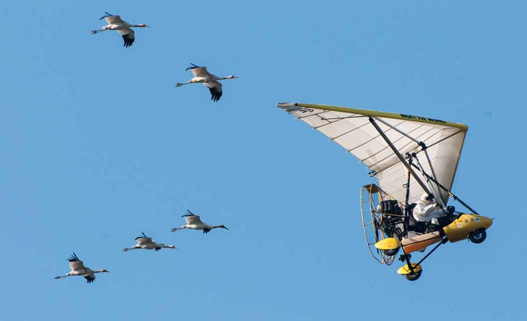 Whooping-cranes-may--lose-ultralight-assistance