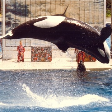 wiki_sea_world_fl_1