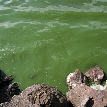 Algae_in_the_Loch_-_geograph.org.uk_-_790035