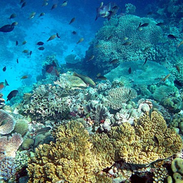 1200px-Coral_reefs_in_papua_new_guinea