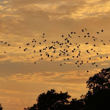 Birds_in_the_sky_(9385283256)