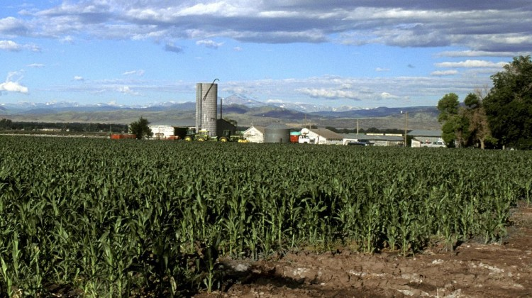 Corn_field_in_Colorado