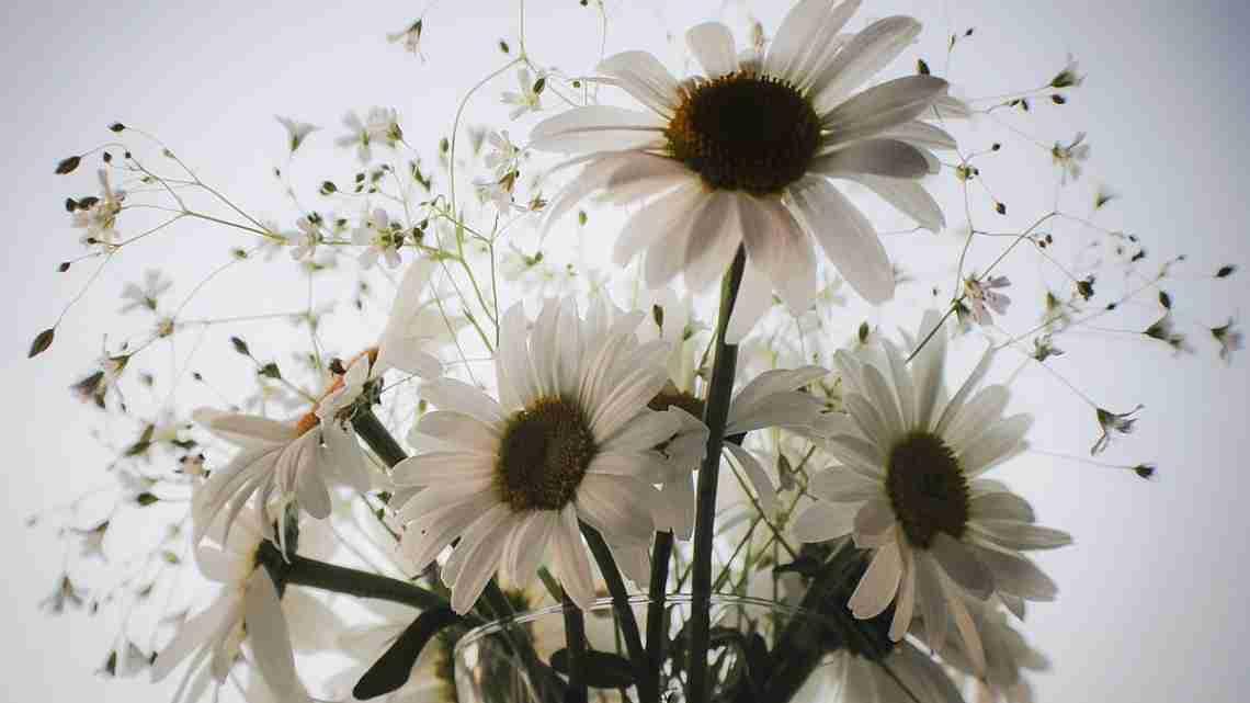 Flowers-093dv