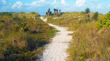 Miami_Beach_-_Sand_Dune_Flora_-_Walking_Path_Through_Bushes_and_Plants