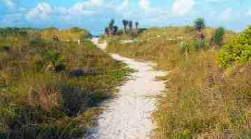 Miami_Beach_-_Sand_Dune_Flora_-_Walking_Path_Through_Bushes_and_Plants