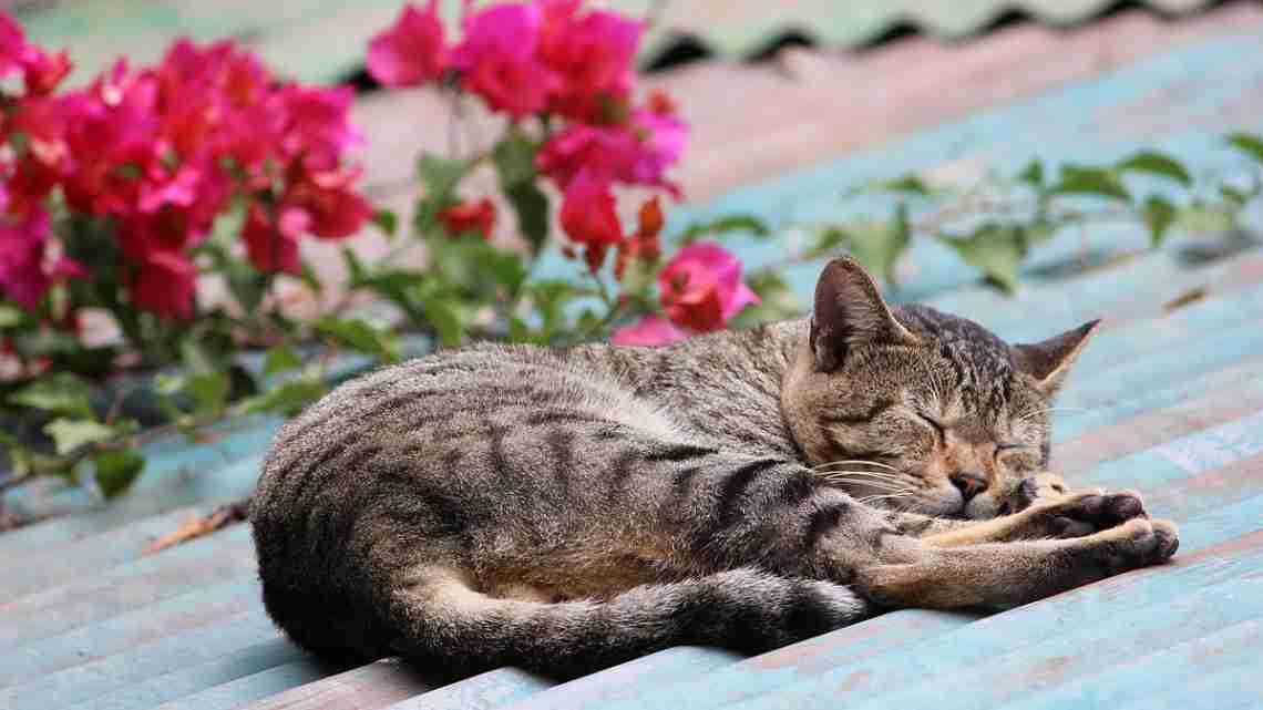 Sleeping_on_the_Roof
