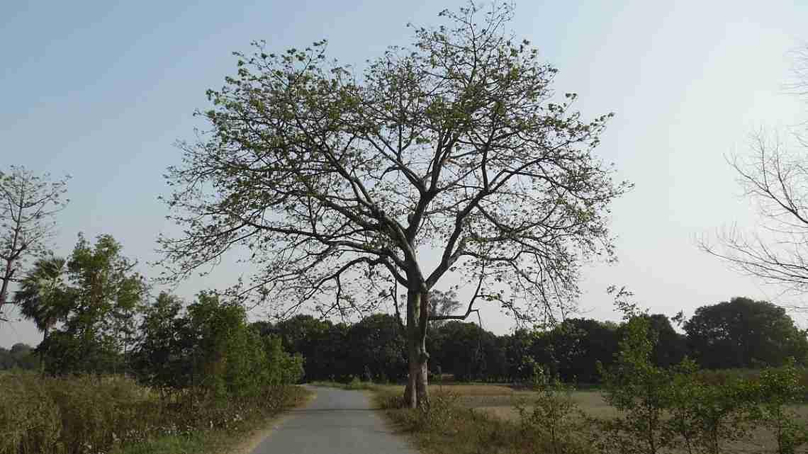 Amazing_Tree_Landscape