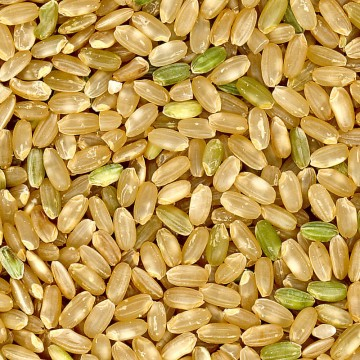1200px-Brown_rice